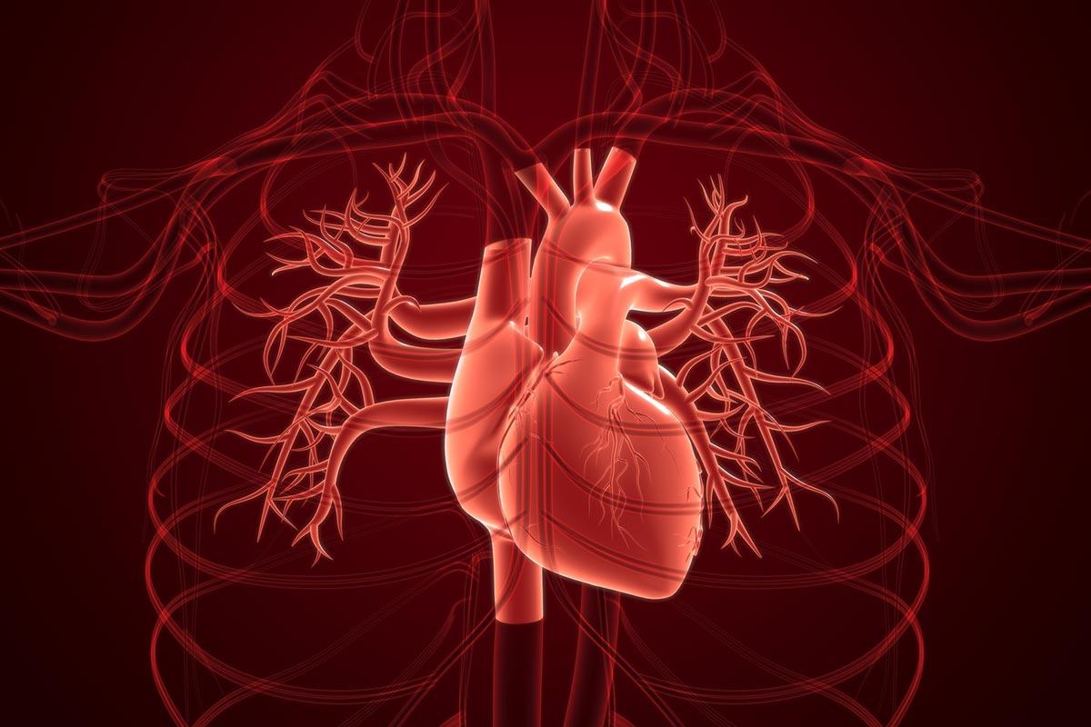 動悸が起こる心臓の病気の種類と対応